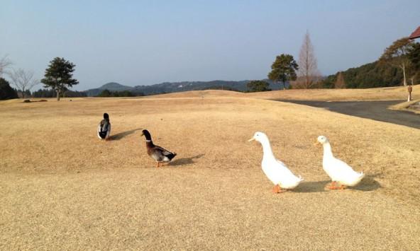 20140119_diary_kazuya13