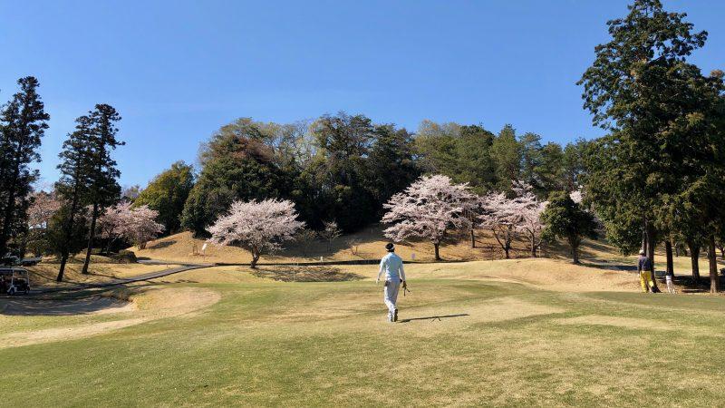 GEN-TENゴルフコースレッスンアカデミアフェアウェイと桜の写真