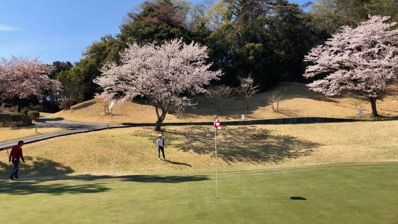 GEN-TENゴルフコースレッスンアカデミアグリーンと桜の写真